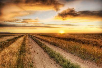夕焼けに染まる道路