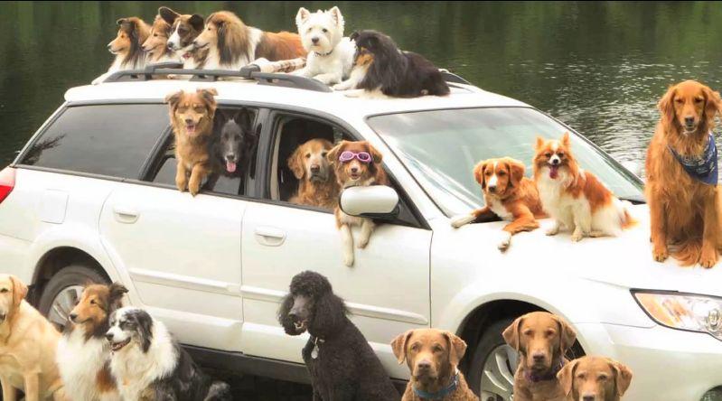 スバル「レガシィ」と犬たち